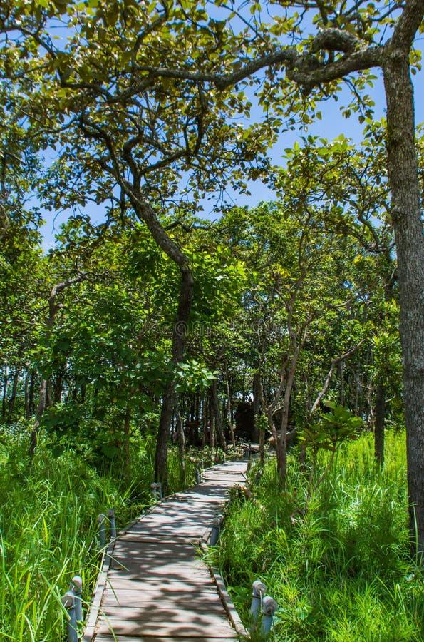 A maneira de madeira da caminhada no Moutain no parque nacional do Pa Hin Ngam foto de stock royalty free