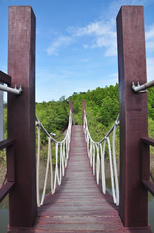 Maneira de madeira entre a floresta dos manguezais, Tailândia do trajeto foto de stock