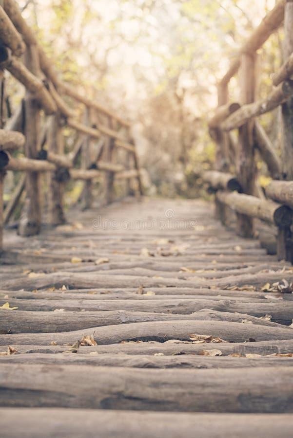Maneira de madeira de ponte na floresta da queda fotografia de stock