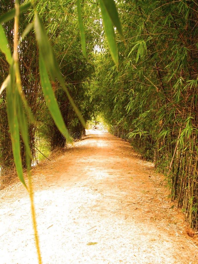 Maneira do bambu 7 imagens de stock