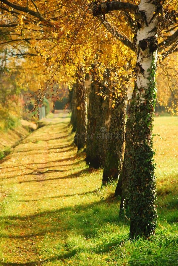 Maneira do outono imagens de stock royalty free