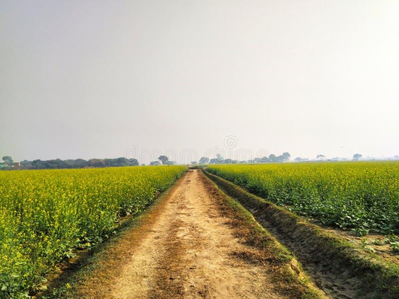 Maneira infinita cercada por plantas verdes e amarelas imagens de stock royalty free