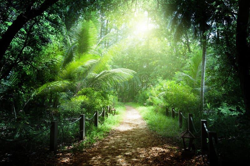 Maneira na selva de Seychelles