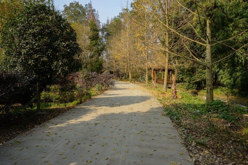 Maneira protegida nas madeiras da tarde ensolarada do inverno foto de stock royalty free