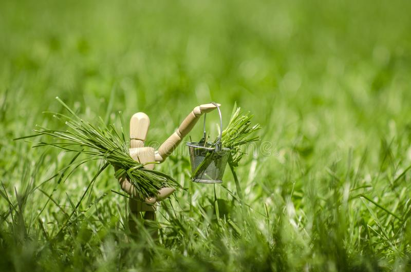 Manequim de madeira com cubeta à disposição, enchido com a grama verde foto de stock