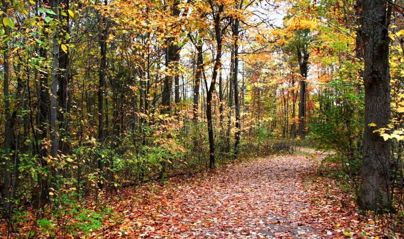 Manera de la caminata del otoño fotografía de archivo