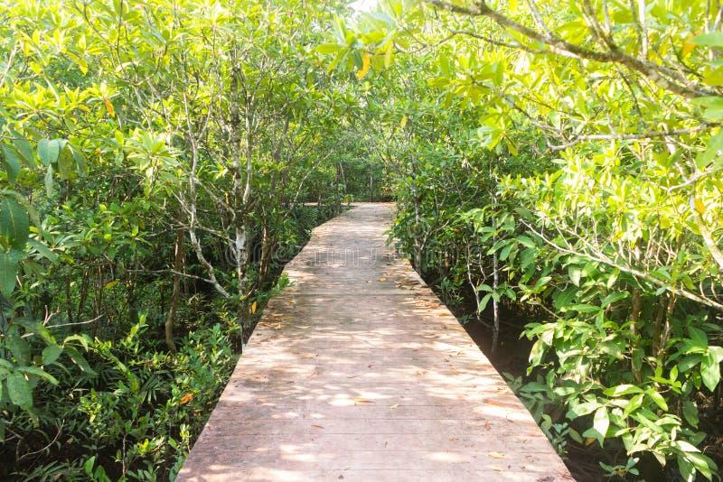 Manera de madera en bosque en Thapom, canción Nam, Krabi de Klong, tailandés imágenes de archivo libres de regalías