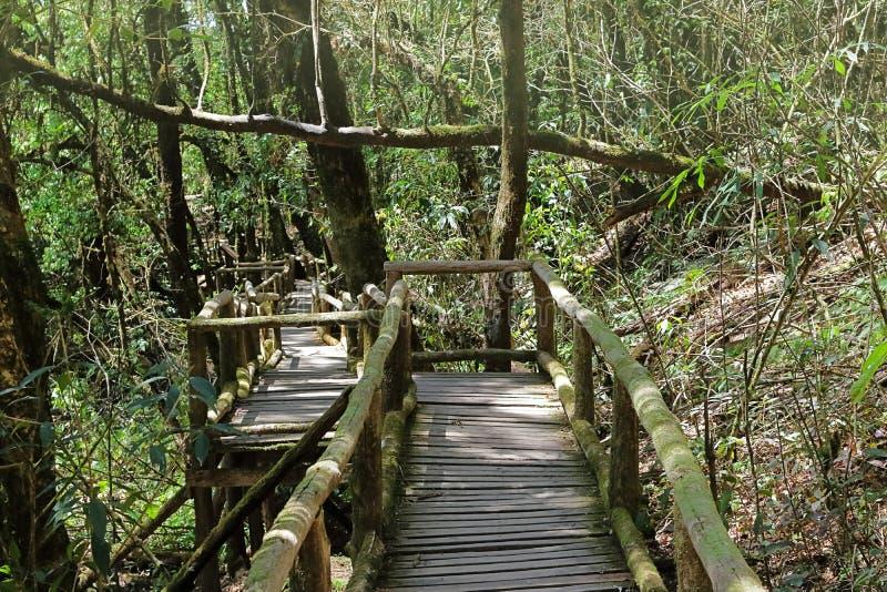 Manera de madera de la escalera a la selva entre fondo verde hermoso del follaje en el parque nacional de Doi Inthanon, Chiang Ma fotografía de archivo libre de regalías