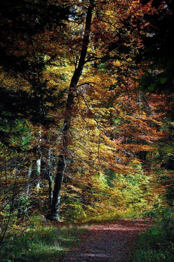 Manera del color en madera foto de archivo