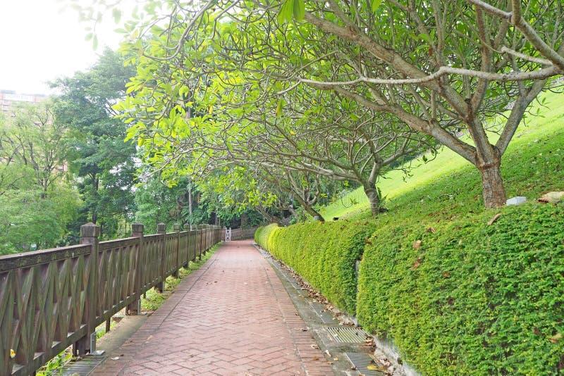Manera del paseo con adelante el árbol del verde foto de archivo