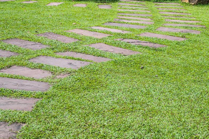 manera del paseo con la hierba verde imagen de archivo