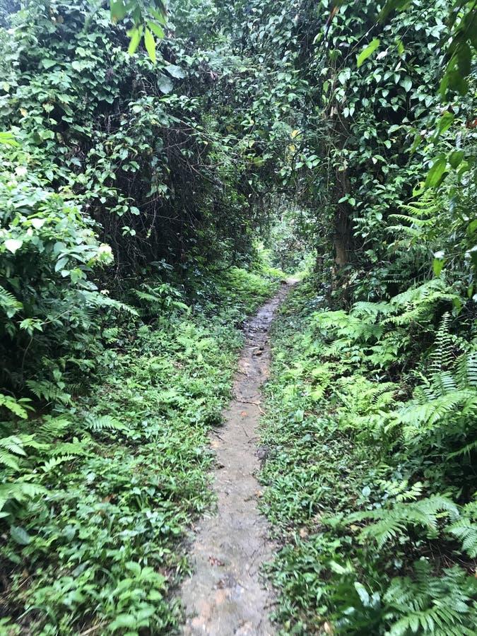 Manera en bosque de la selva fotos de archivo libres de regalías