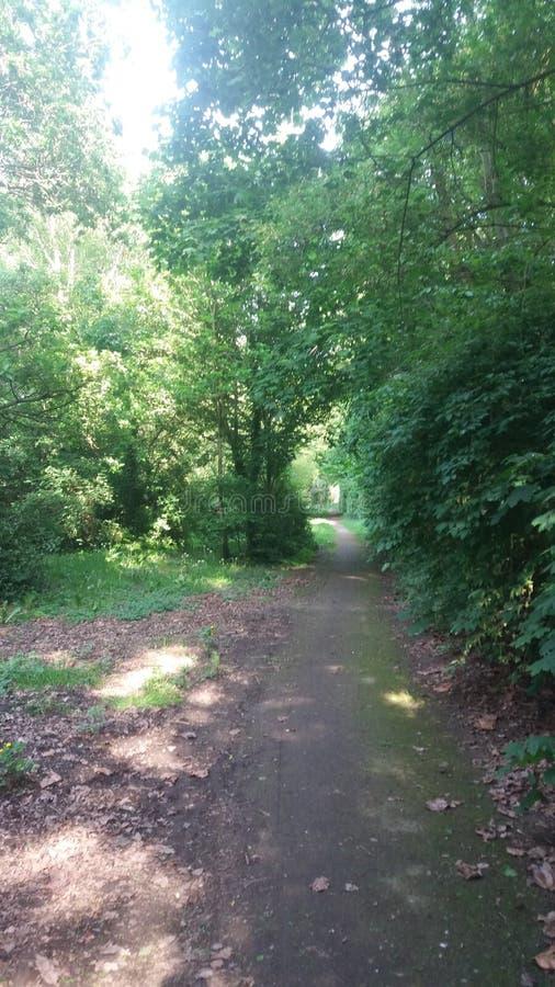 Manera en el bosque foto de archivo
