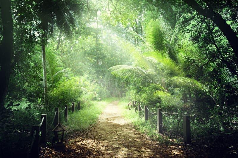 Manera en la selva de Seychelles imagenes de archivo