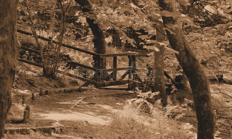 Manera natural de la trayectoria de la sepia en bosque imagen de archivo libre de regalías