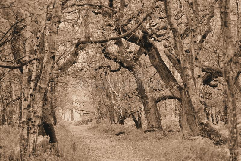 Manera natural de la trayectoria de la sepia en bosque foto de archivo