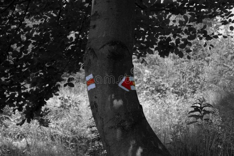 Manera roja imagen de archivo