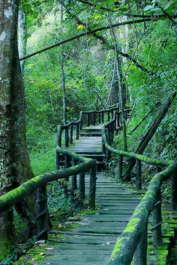 Manera a través del bosque imagen de archivo