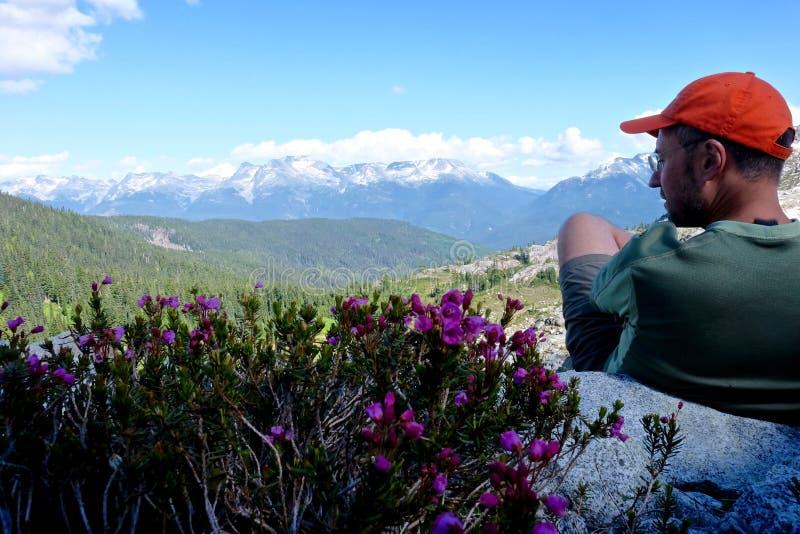 Manfotvandrare i berg vid purpurfärgad ljung royaltyfri foto