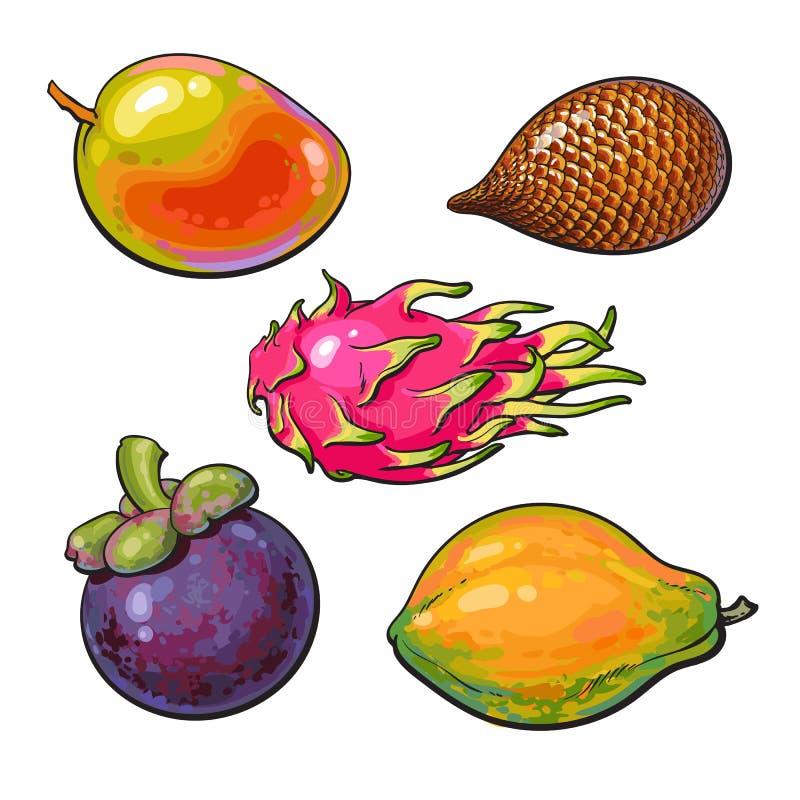 Manga unpeeled, sem cortes inteira, papaia, mangustão, salak, fruto tropical do pitaya ilustração stock