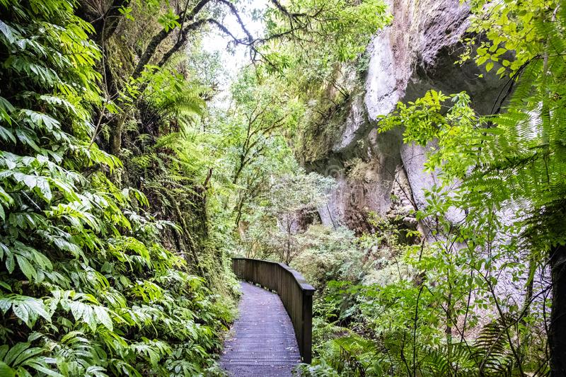 Mangapohue Natural Bridge walk in Waitomo in summer. Bush walk, Waitomo district. New Zealand royalty free stock photos