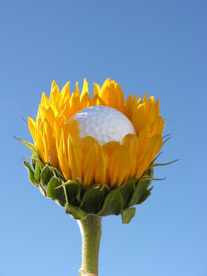 Mangeur de bille de golf photos libres de droits