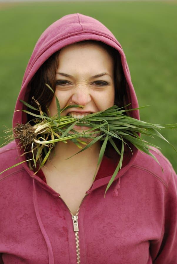 Mangi l'erba fotografie stock libere da diritti