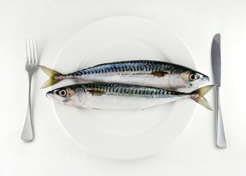 Mangi più pesci fotografie stock libere da diritti