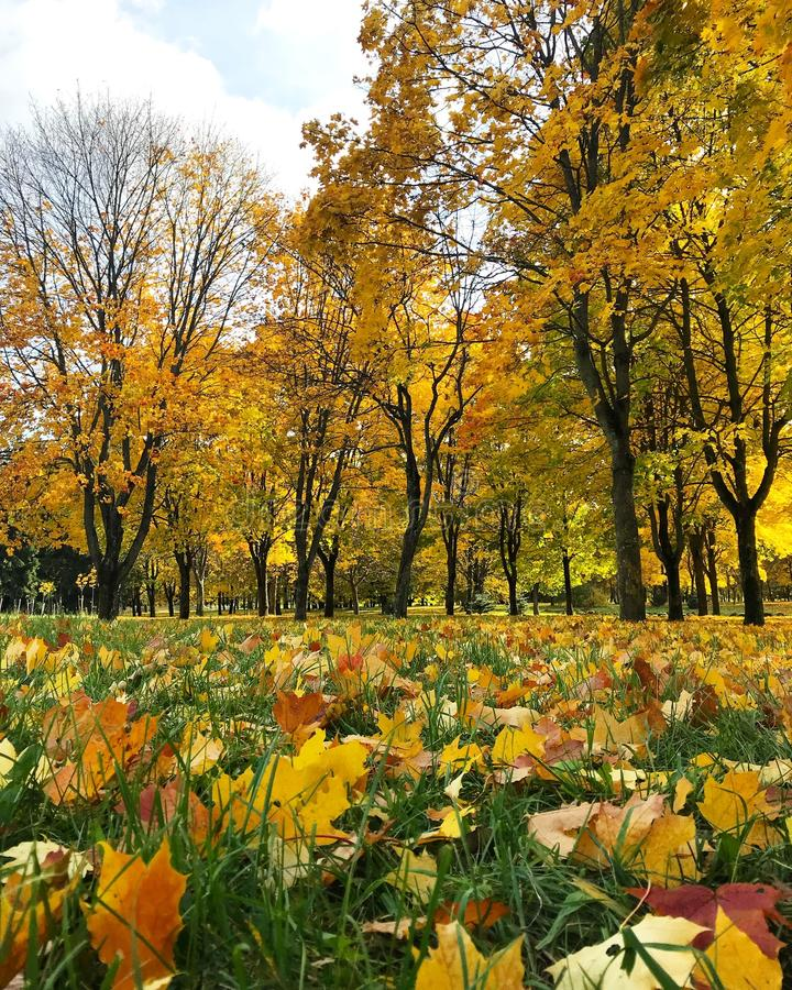 Mangificent秋天在白俄罗斯 库存图片