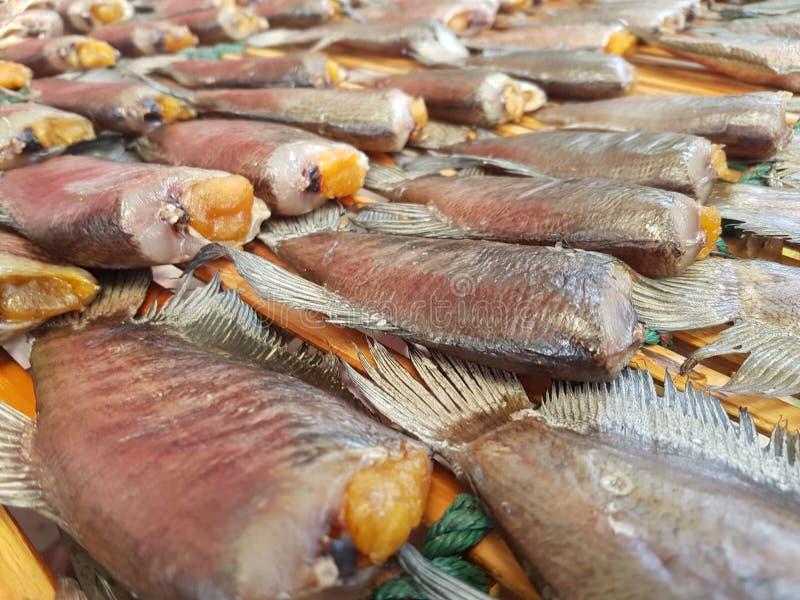 Mangime per pesci fotografia stock