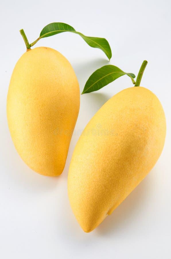 mango fotografering för bildbyråer
