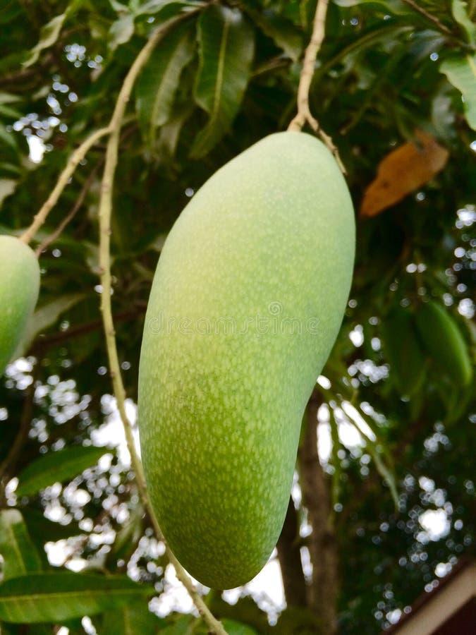 mango royalty-vrije stock foto's