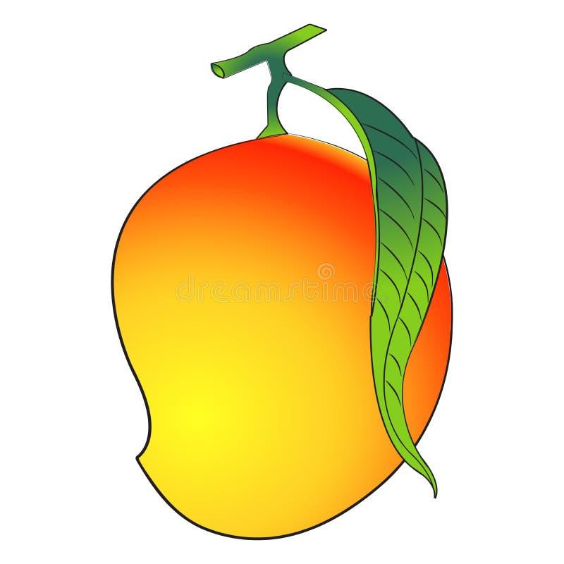 Mango. Illustration mango on isolated background vector illustration