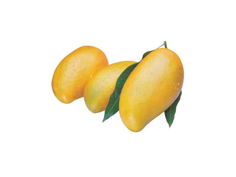 Mango2 stockfotografie