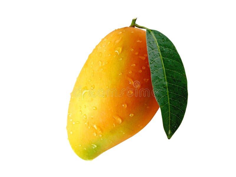Mango3 stockfotografie