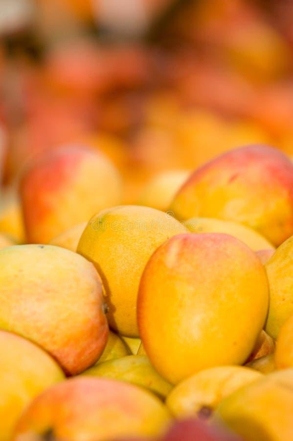 Mango. Colorful mango