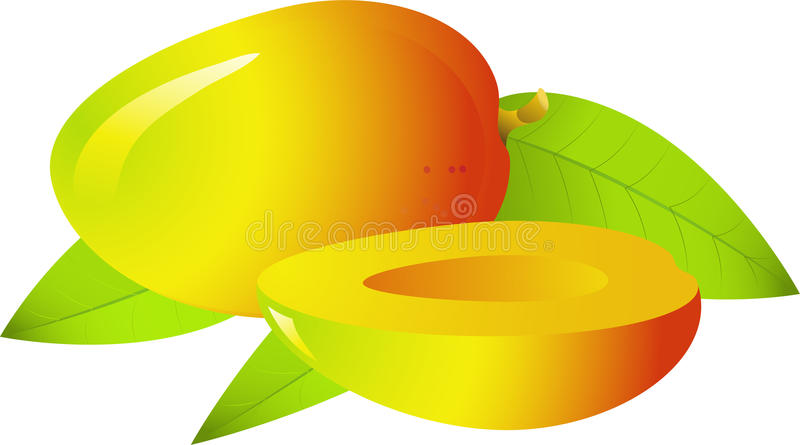 Mango. Vectors of ripe and juicy fruit is the mango! Isolated on white. Eps 8 vector illustration