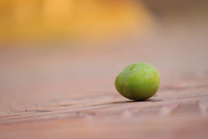 Mango auf Flächenerde lizenzfreies stockfoto