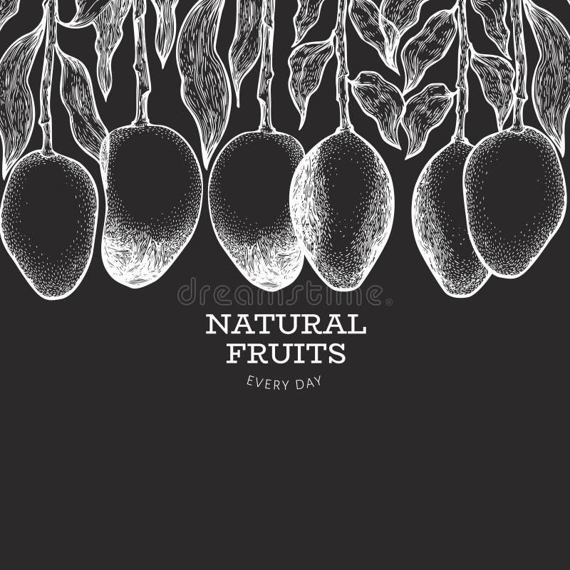 Mango banner. Hand drawn vector exotic fruit illustration on chalk board. Engraved style tropic fruit. Vintage food design royalty free illustration