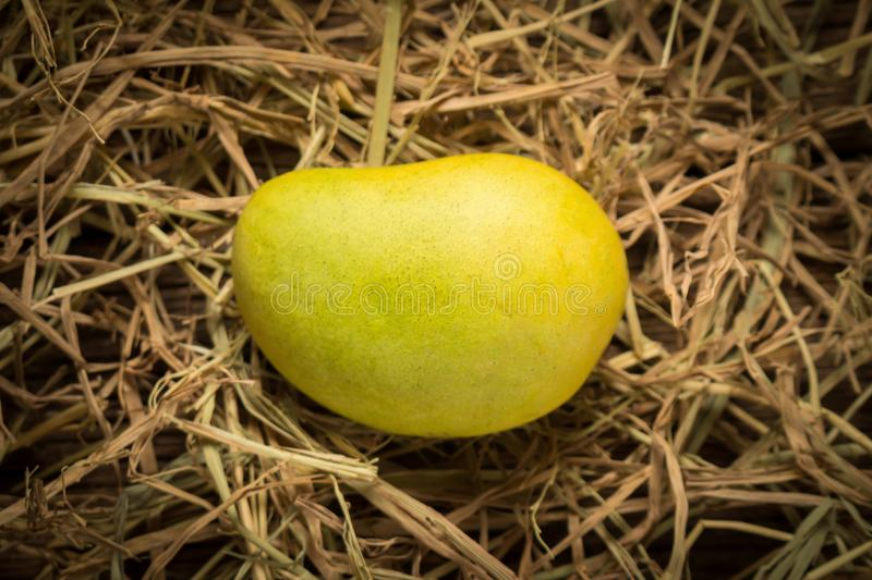 Mango color Chartreuse. green and yellow. name yaikrom. asian. t. Hailand. isolated on white background stock photos