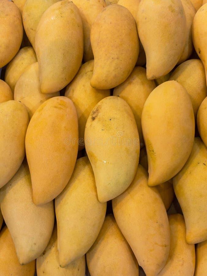 Mango del barracuda fotografia stock