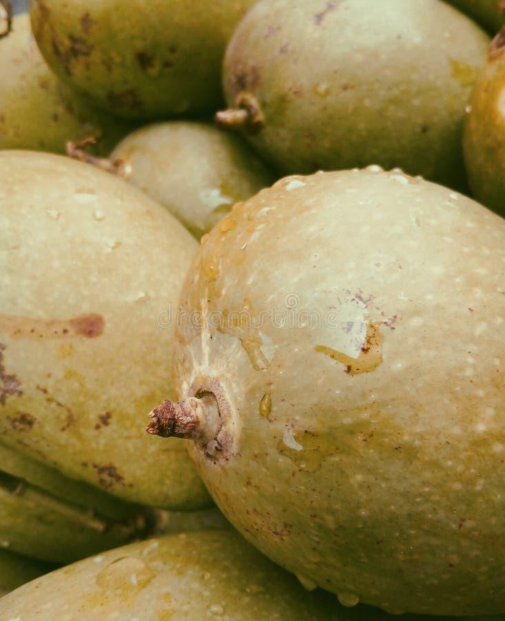 Mango. Delicious Food. stock photos