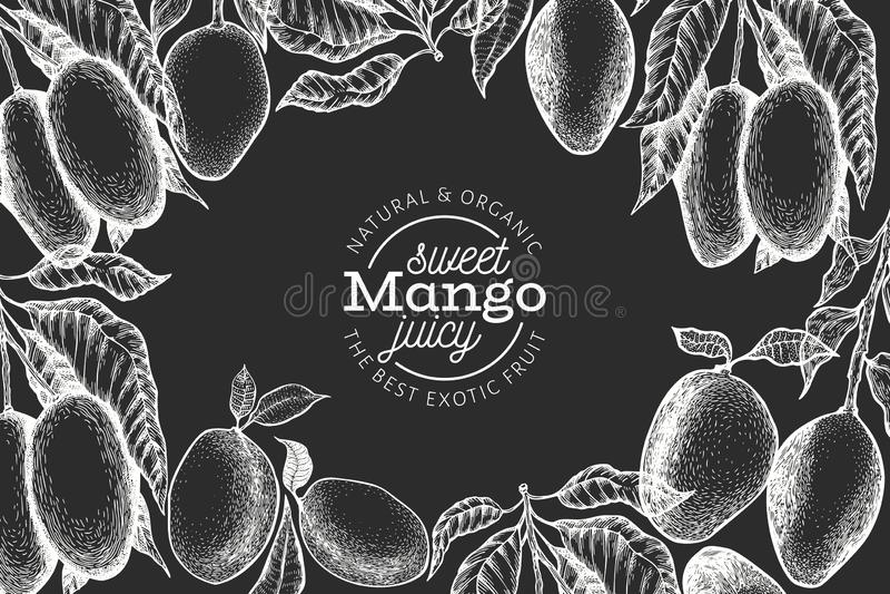 Mango design template. Hand drawn vector tropic fruit illustration on chalk board. Engraved style fruit. Vintage exotic food vector illustration