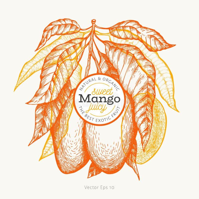 Mango design template. Hand drawn vector tropic fruit illustration. Engraved style fruit. Vintage exotic food banner vector illustration