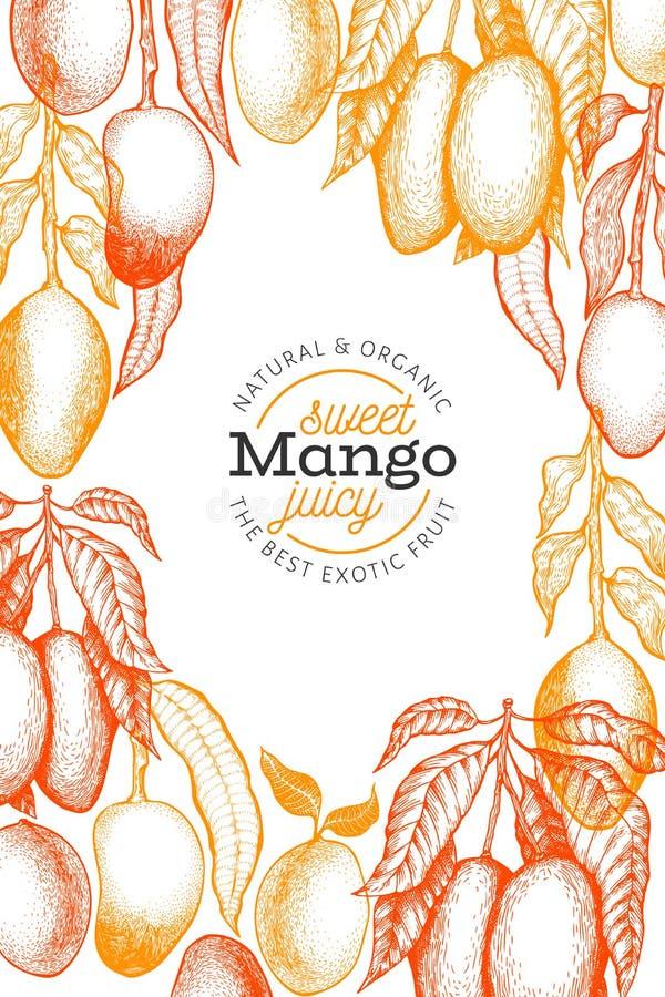 Mango design template. Hand drawn vector tropic fruit illustration. Engraved style fruit. Vintage exotic food banner royalty free illustration