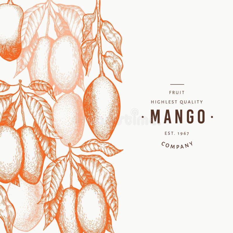 Mango design template. Hand drawn vector tropic fruit illustration. Engraved style fruit. Vintage exotic food banner stock illustration