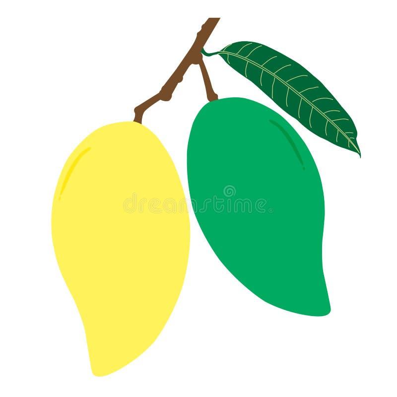 Mango e foglia crudi e maturi con il ramo fotografia stock