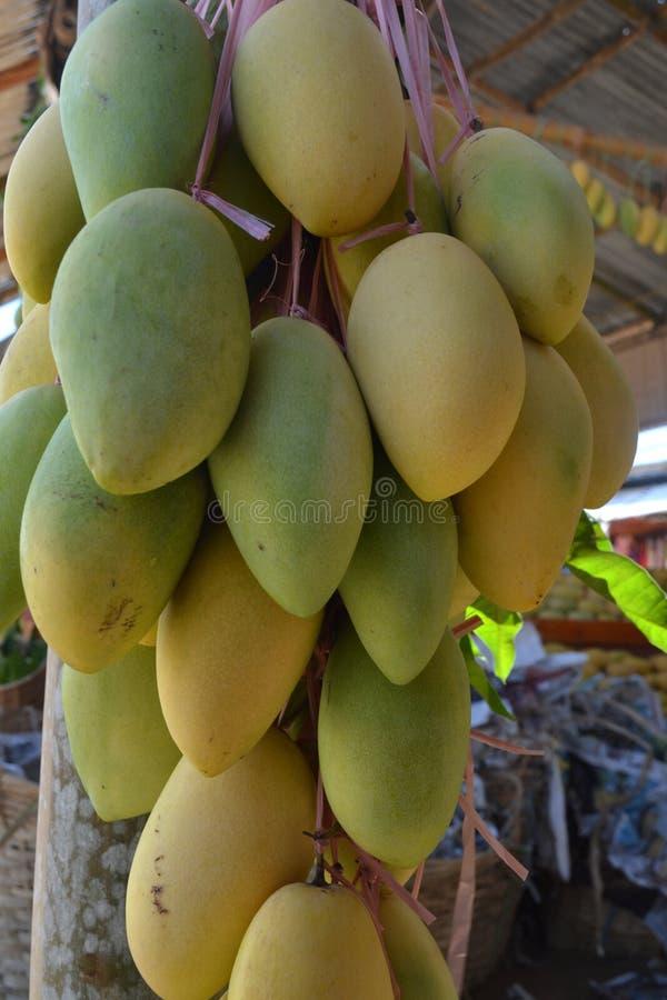 Mango, el producto de la exportaci?n de las Filipinas fotografía de archivo