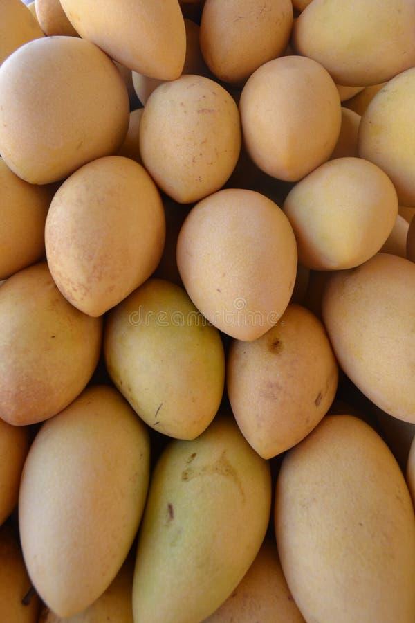 Mango, el producto de la exportaci?n de las Filipinas foto de archivo