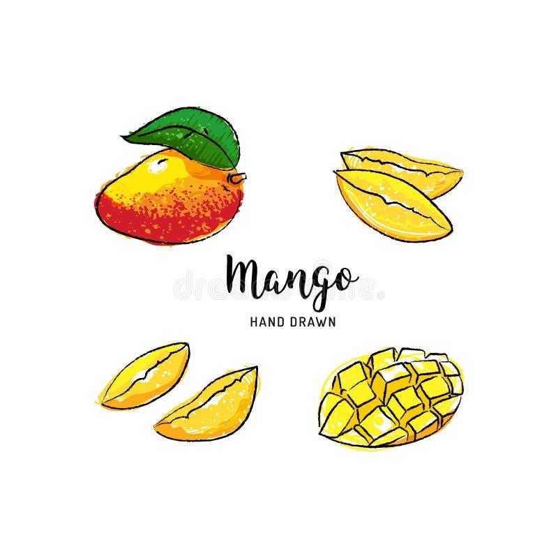 Mango exhausto de la mano del vector del dibujo de la fruta del mango, frutas coloridas del mango de la acuarela Iconos del vecto libre illustration